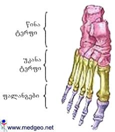 ტერფის ძვლები